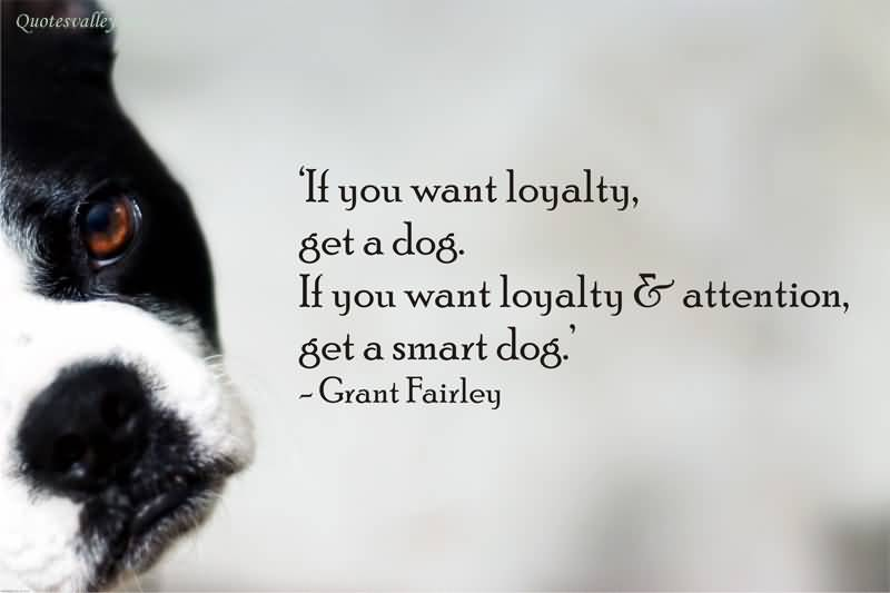 A Dog's Loyalty Quote Pinterest thumbnail