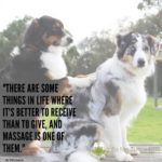 Animal Therapy Quotes Pinterest