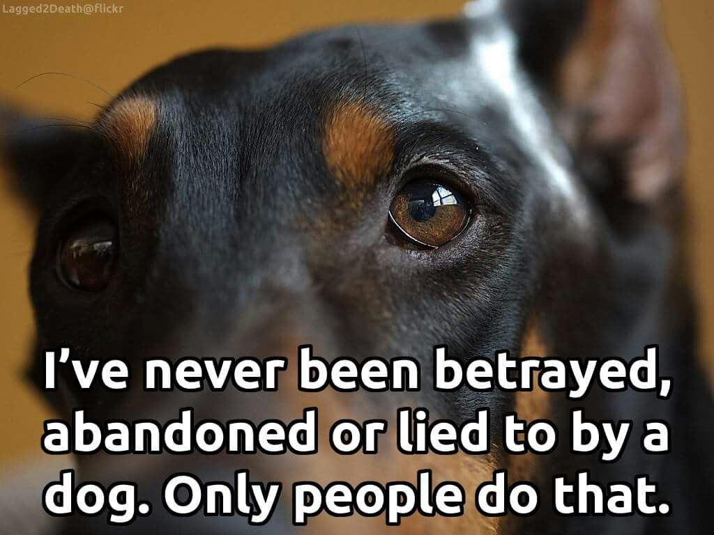 Animal Trust Quotes Twitter Best Of Forever Quotes