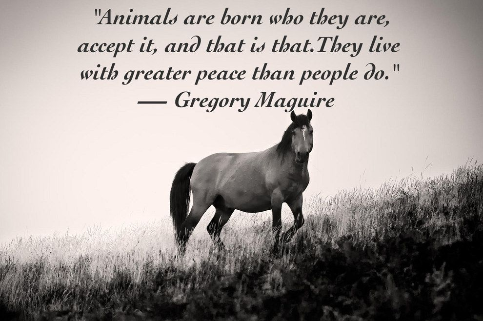 Animals Are Better Than Human Quotes Facebook thumbnail