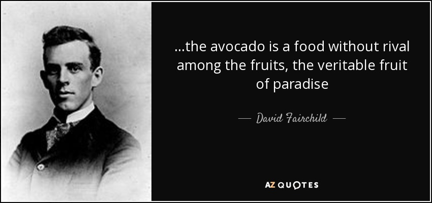 Avocado Quotes Tumblr thumbnail