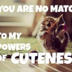 Baby Animal Quotes