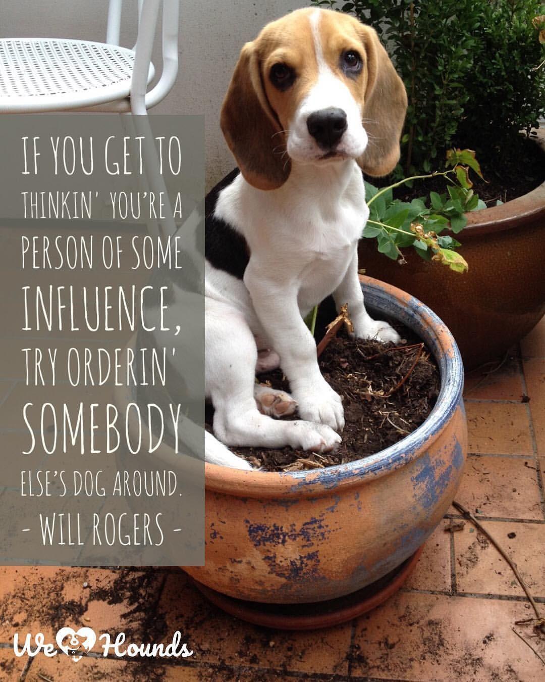 Beagle Dog Quotes Twitter thumbnail