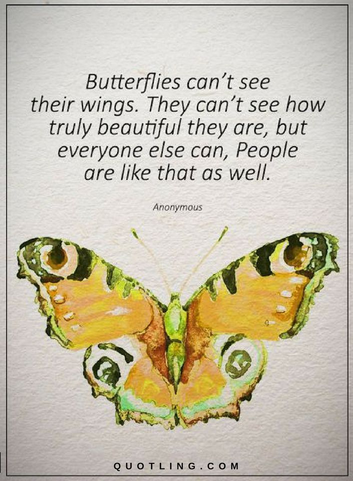 Beautiful Butterfly Quotes Twitter thumbnail