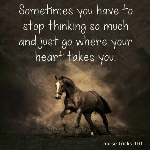 Beautiful Horse Quotes Pinterest thumbnail