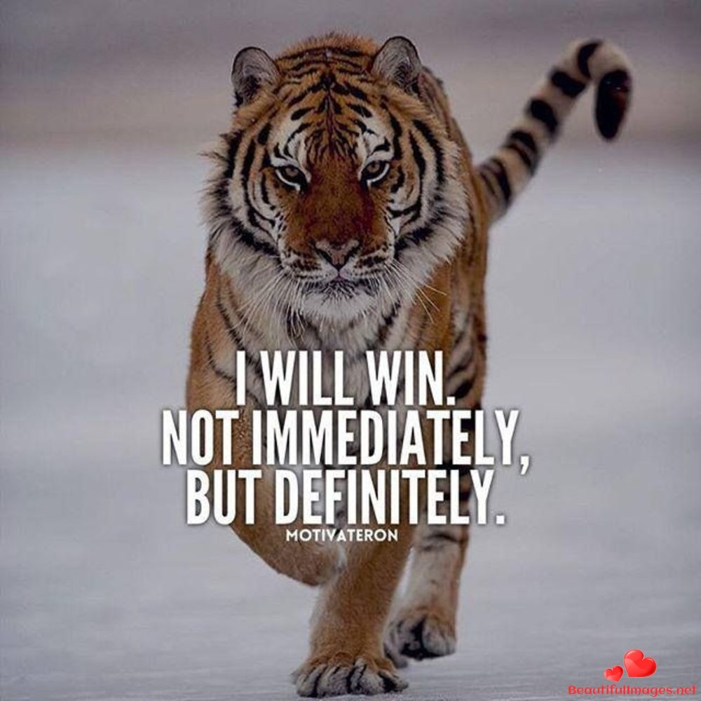 Best Tiger Quotes Twitter thumbnail