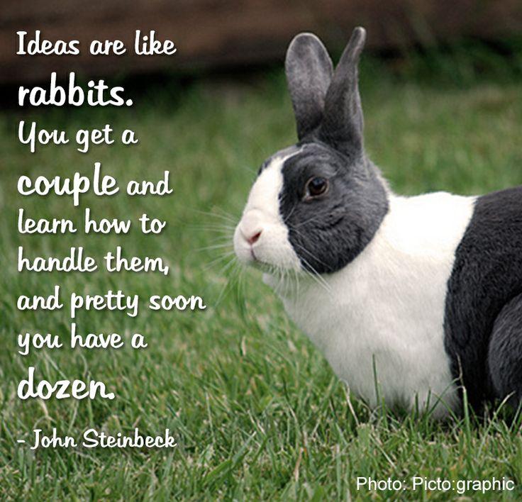 Bunny Rabbit Quotes Tumblr thumbnail