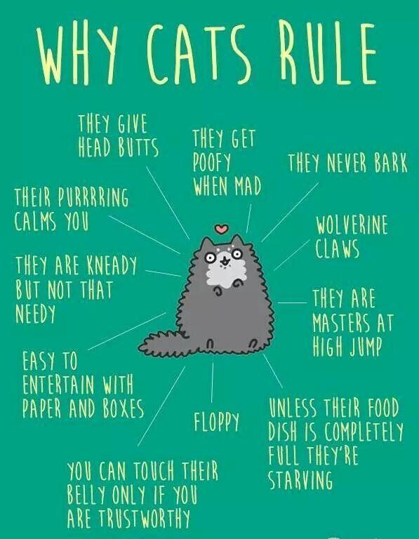 Cat Food Quotes Pinterest thumbnail