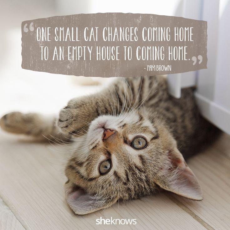 Cat Love Quotes Tumblr thumbnail