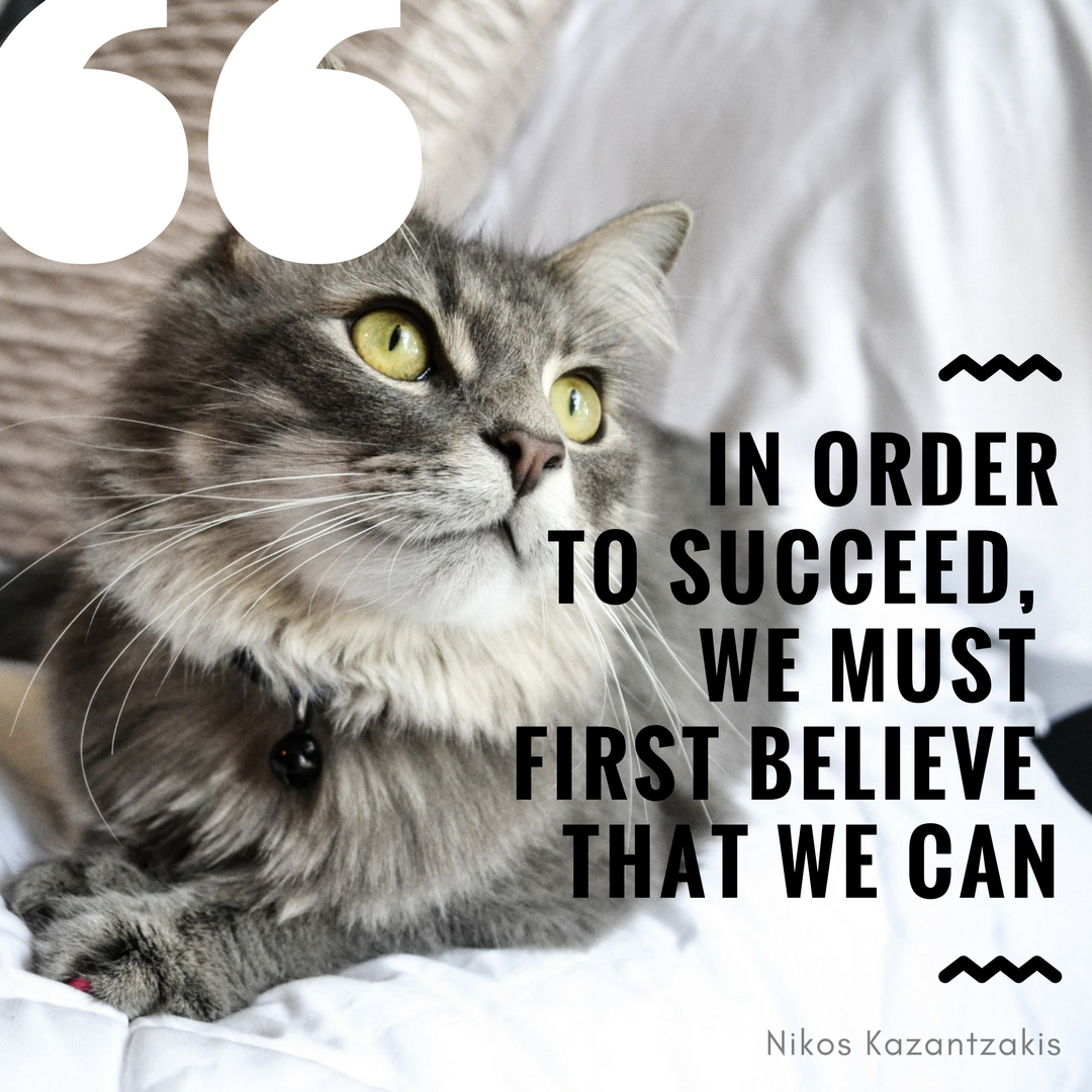 Cat Philosophy Quotes Pinterest thumbnail