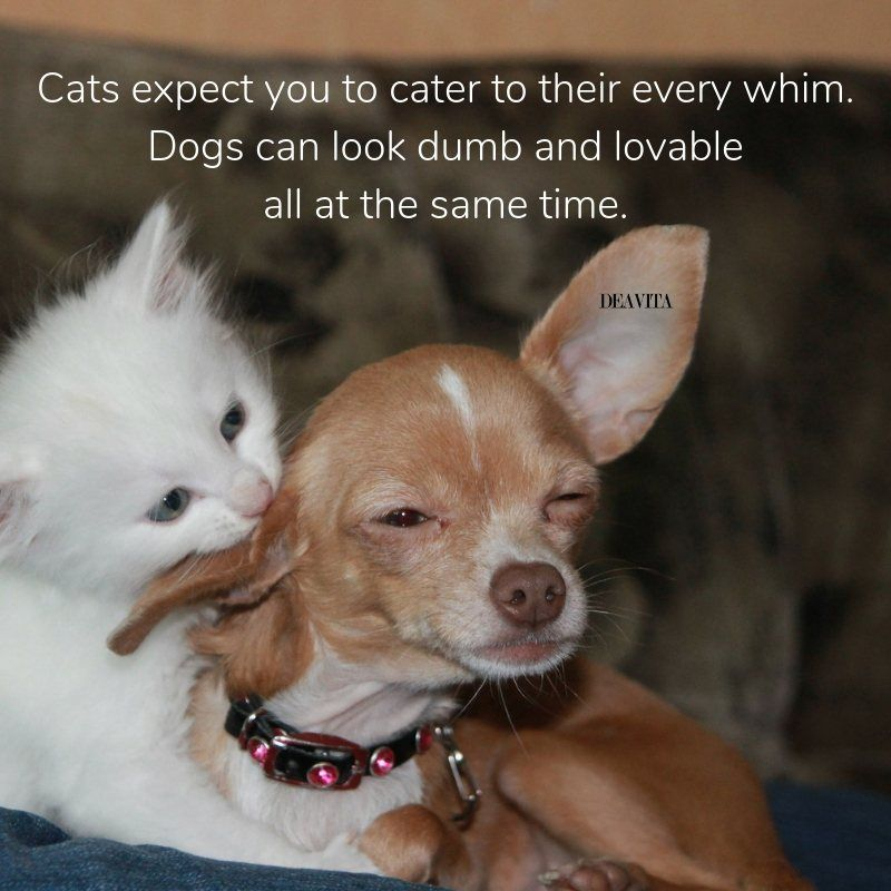 Cats Are Better Than Dogs Quotes Tumblr thumbnail