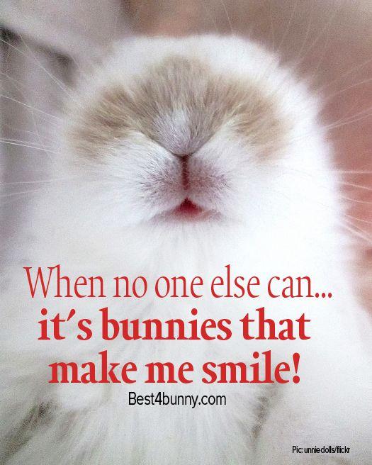 Cute Bunny Quotes Sayings thumbnail