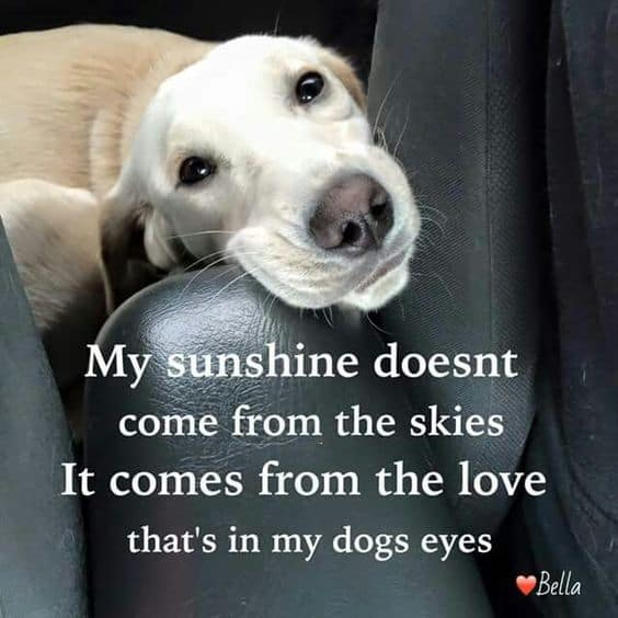 Cute Captions About Dogs Facebook thumbnail