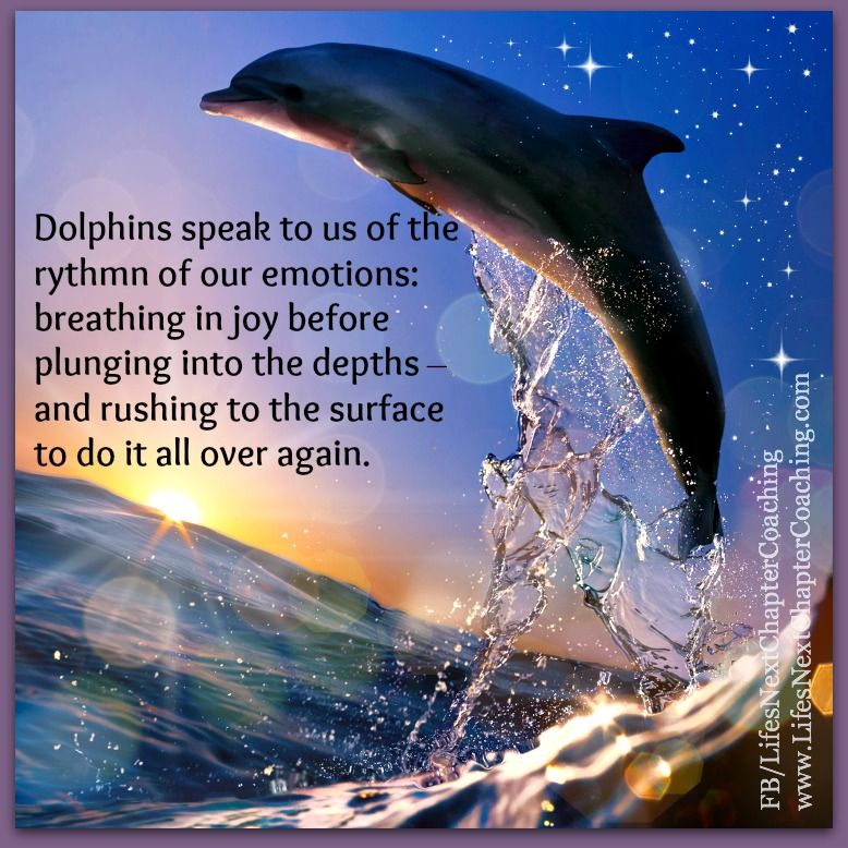 Cute Dolphin Quotes Facebook thumbnail