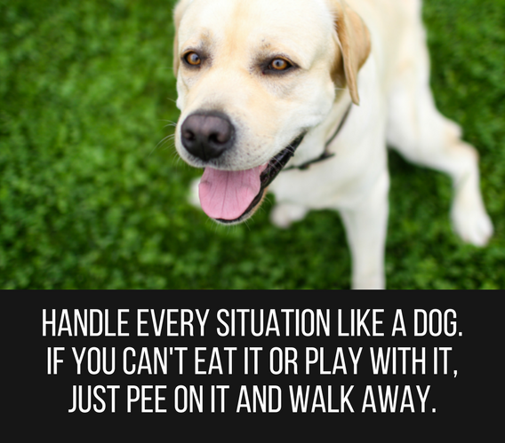 Cute Funny Animal Quotes Tumblr thumbnail