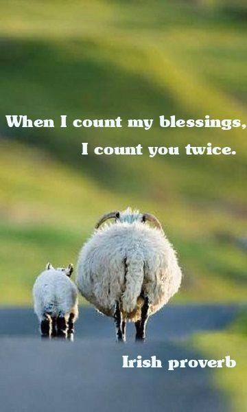 Cute Lamb Sayings Twitter thumbnail