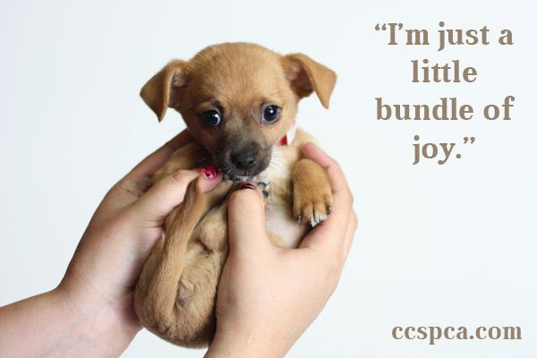 Cute Puppy Captions For Instagram Facebook thumbnail