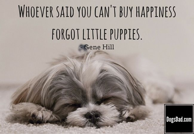 Cute Puppy Pictures With Quotes Facebook thumbnail