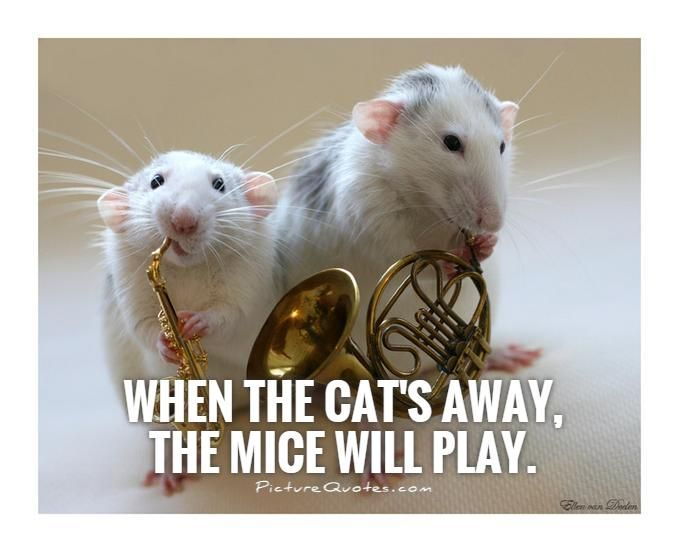 Cute Rat Quotes thumbnail