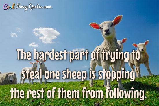 Cute Sheep Quotes Facebook thumbnail