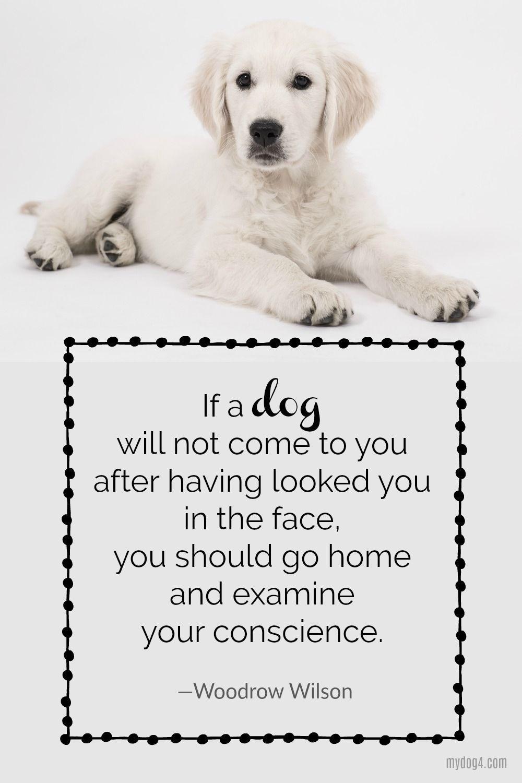 Dog Love Quotes Pinterest thumbnail