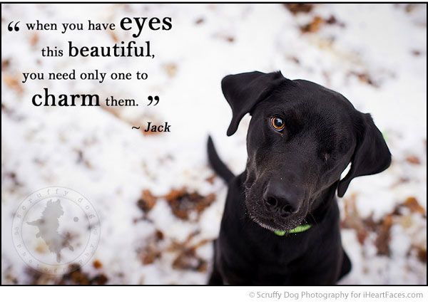 Dog Photography Quotes Twitter thumbnail
