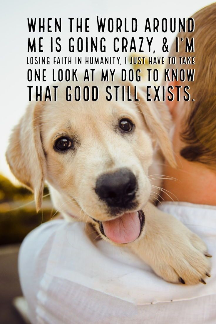 Dog Quotes And Sayings Pinterest thumbnail