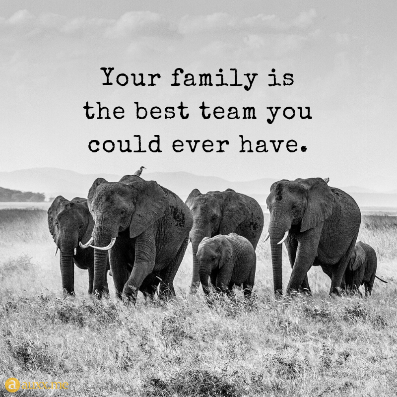 Elephant Family Quotes Tumblr thumbnail
