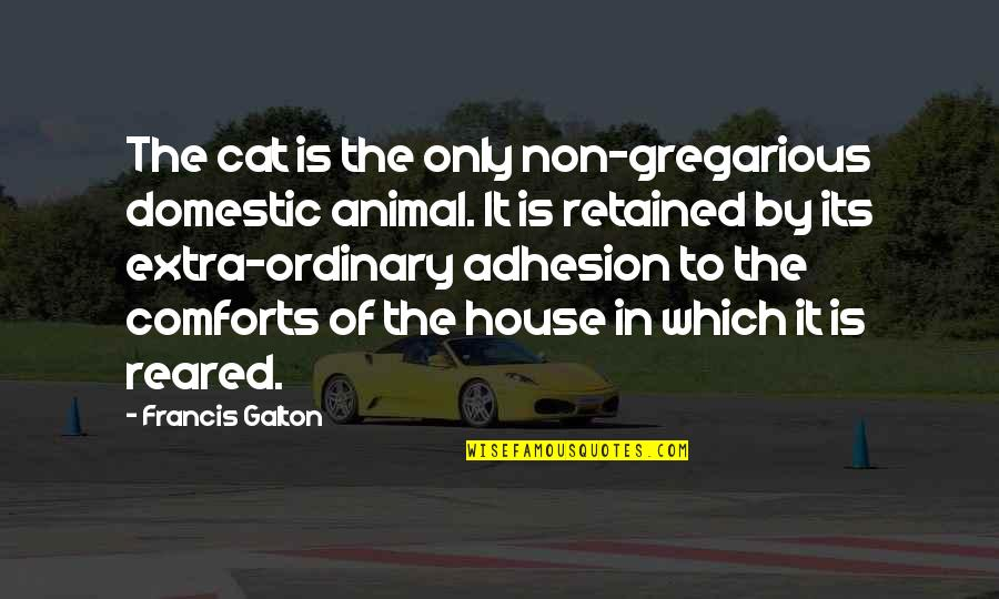 Famous Animal House Quotes Facebook thumbnail