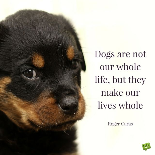 Famous Rottweiler Quotes Facebook thumbnail