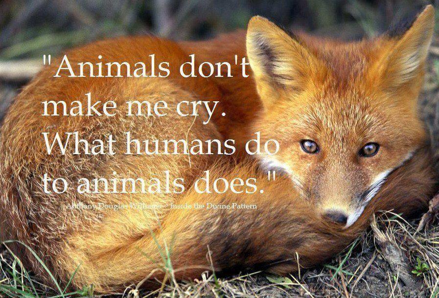 Fox Animal Quotes Twitter thumbnail