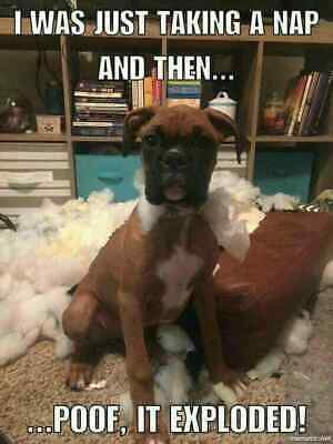 Funny Boxer Dog Pictures With Captions Pinterest thumbnail