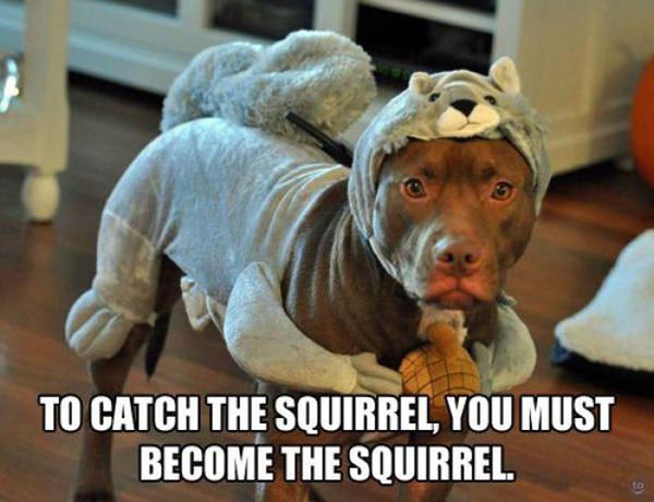 Funny Dog Images With Captions Twitter thumbnail