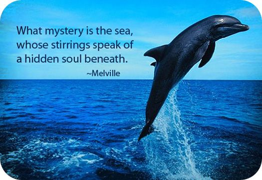 Funny Dolphin Quotes Pinterest thumbnail