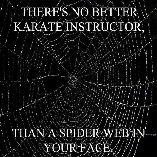 Funny Spider Web Quotes Facebook thumbnail