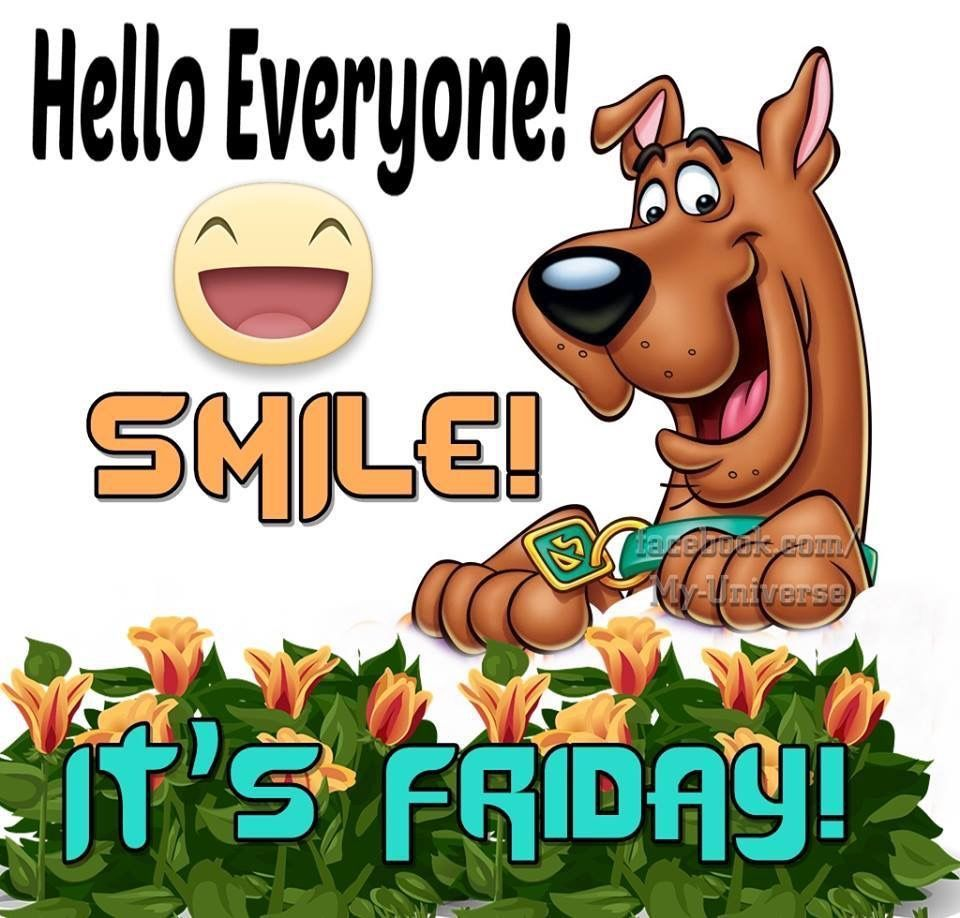Good Morning Friday Funny Quotes Facebook thumbnail