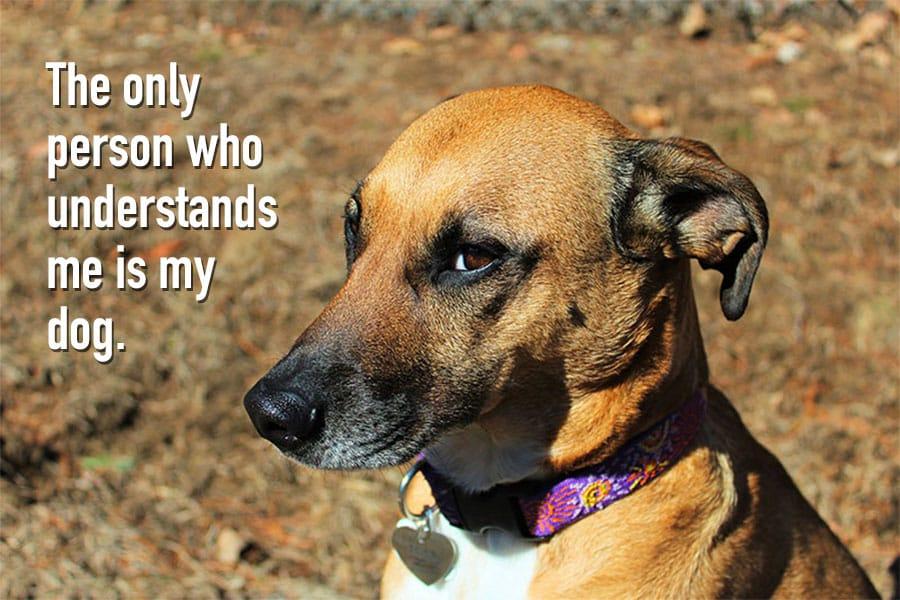 Having A Dog Quotes Tumblr thumbnail