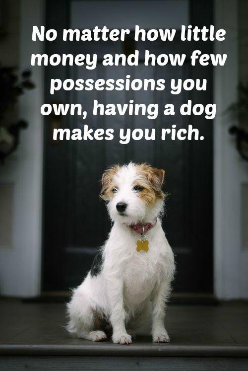 Having A Pet Quotes Facebook thumbnail