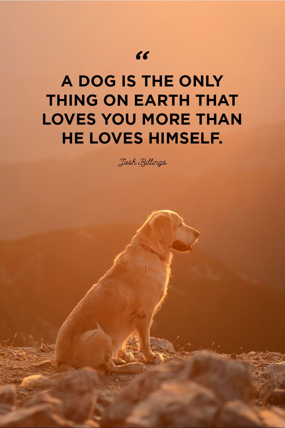 Heart Of A Dog Quotes Twitter thumbnail