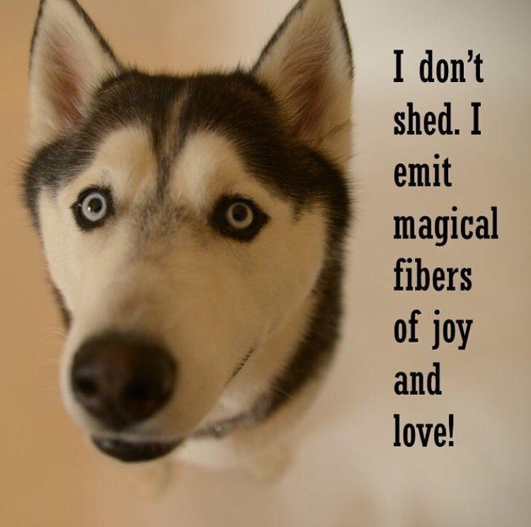 Husky Dog Quotes Facebook thumbnail