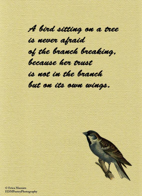 Inspirational Bird Quotes thumbnail
