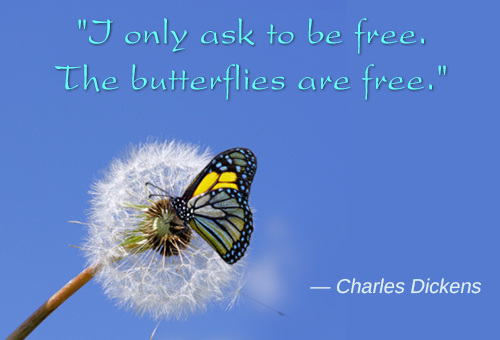 Inspirational Butterfly Quotes Facebook thumbnail