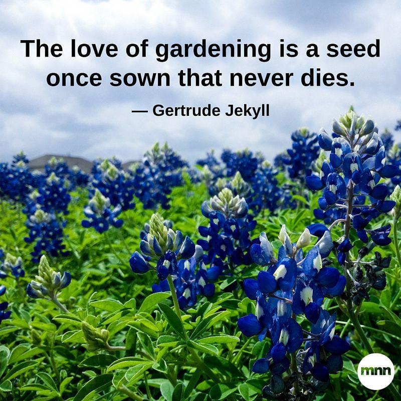 Inspirational Garden Quotes thumbnail