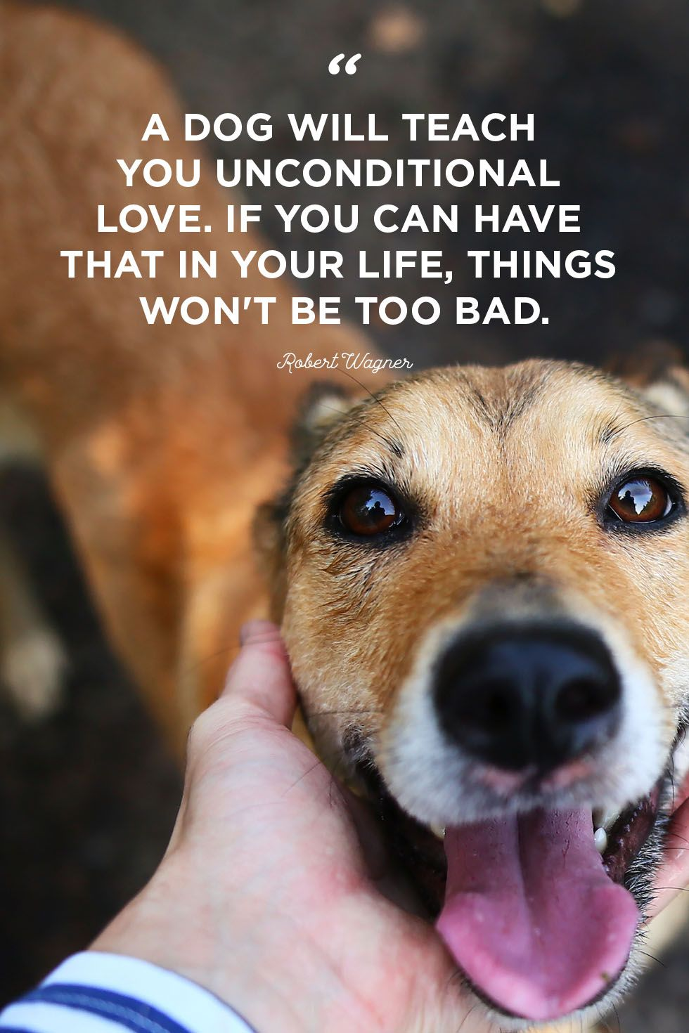 Love For Pet Quotes thumbnail