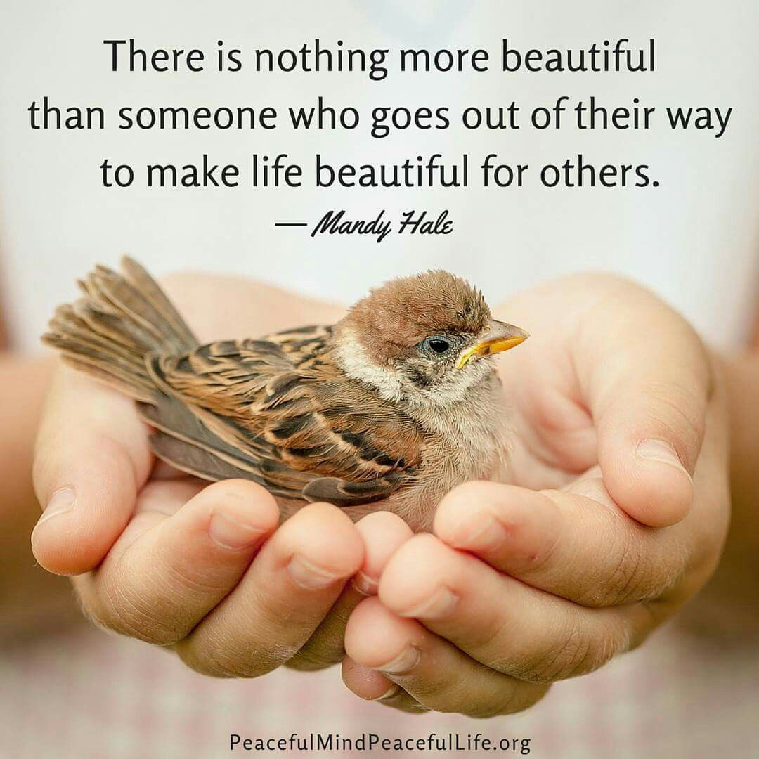 Make Life Beautiful Quotes Twitter thumbnail