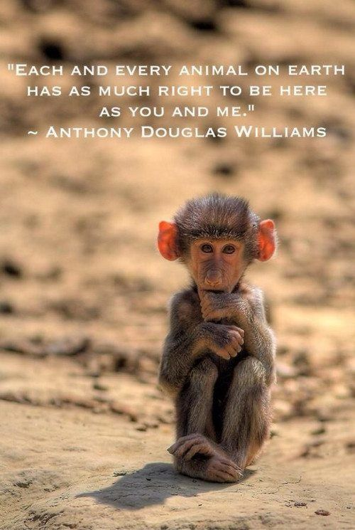 Monkey Love Quotes Tumblr thumbnail