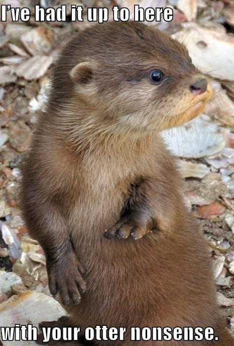 Otter Sayings Twitter thumbnail