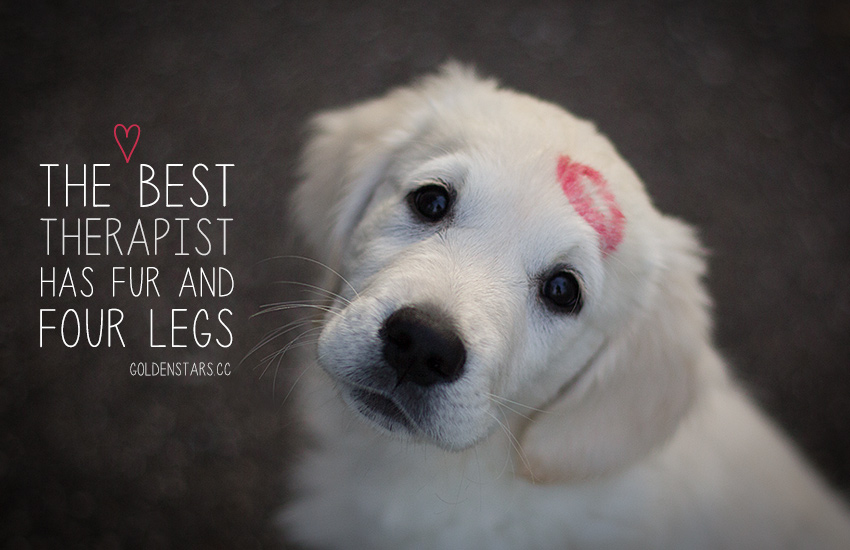Pet Dog Love Quotes Twitter thumbnail