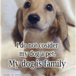 Pets Are Family Quotes Pinterest