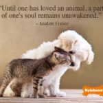 Pets Unconditional Love Quotes Tumblr